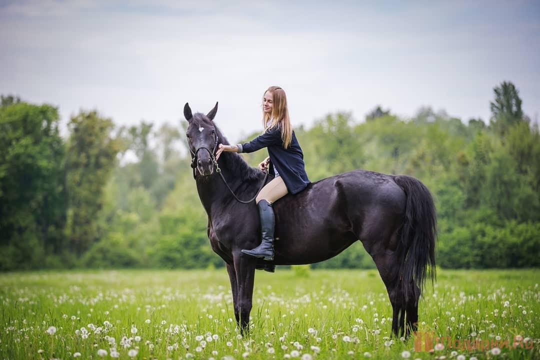 подарочное конное снаряжения