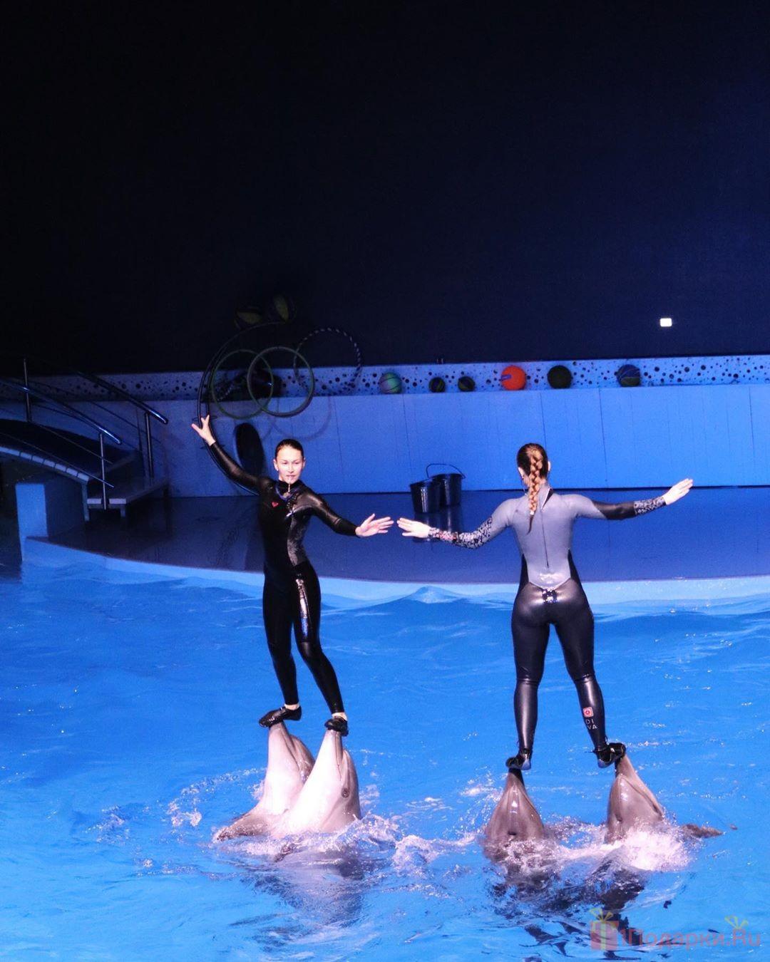 подарить поход в дельфинариум